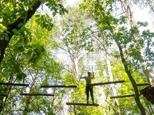 50 300x225 laipynės medžiuose6
