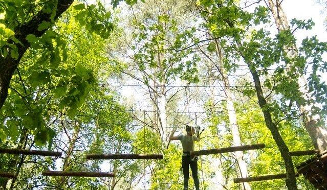 laipynės medžiuose 6
