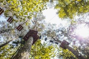 5R1B3805 1 300x200 pramogos Tarzanijos nuotykių parke8