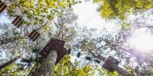 5R1B3805 300x150 Laipynės medžiuose