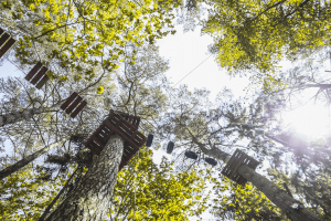 5R1B3805 result 300x200 nuotykiu parkas Tarzanija