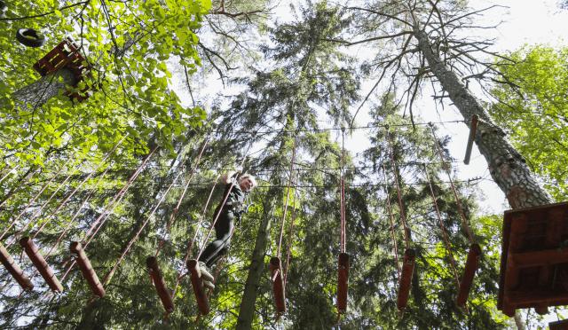 Laipynės medžiuose - 7 trasos 2