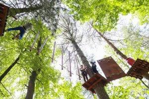 5R1B4136 300x200 laipynės medžiuose8