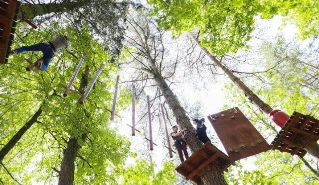 laipynės medžiuose 8