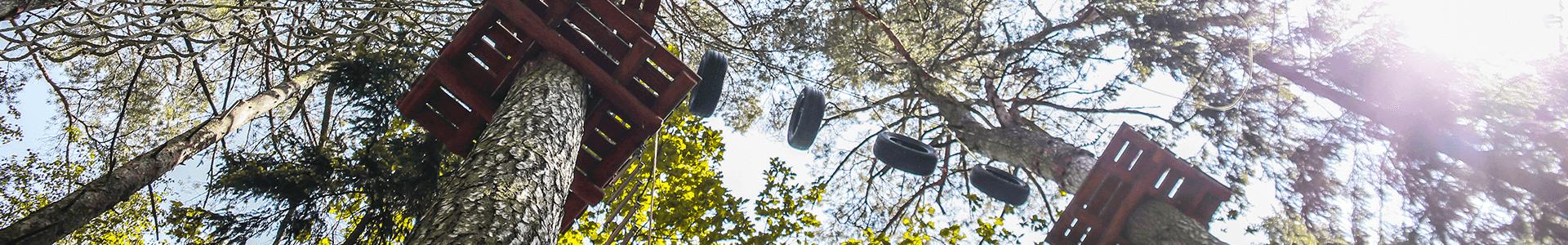 laipynes medziuose Tarzanijoje