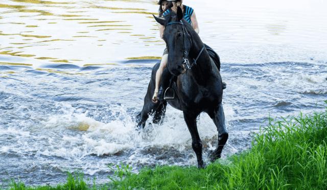 Jodinėjimas žirgais 22