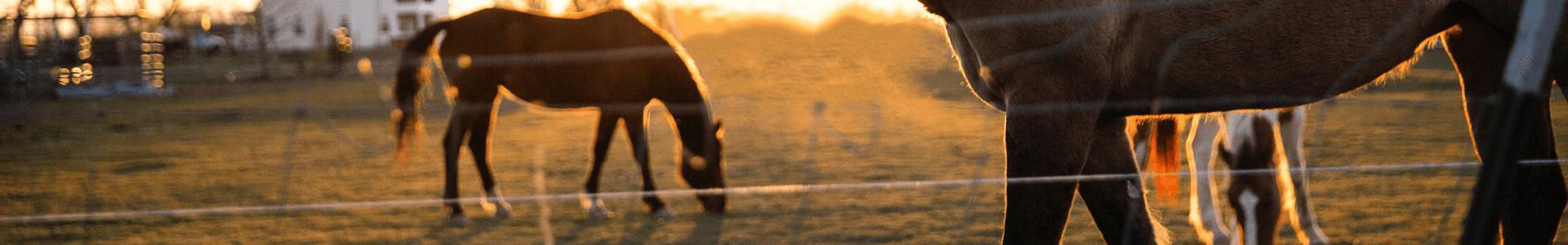 Jodinėjimas žirgais 13
