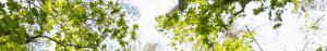 5R1B3825 300x47 aktyvios pramogos Tarzanijoje 9