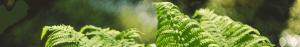 DSC0180 300x47 Joninės Tarzanijoje!