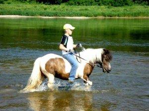 zirg555 300x225 Fotosesija su žirgais 5