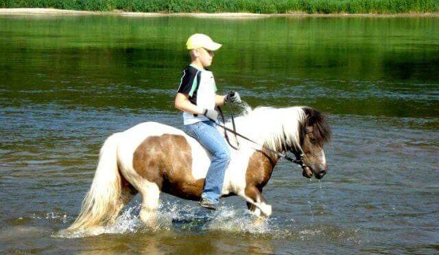 Fotosesija su žirgais img-5