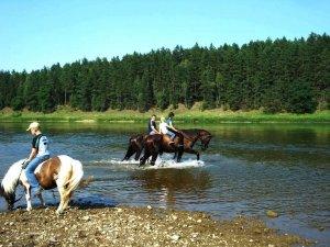 zirgai ir ponis 300x225 Fotosesija su žirgais 3