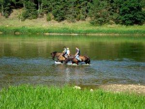 zirgas31 300x225 Fotosesija su žirgais 2